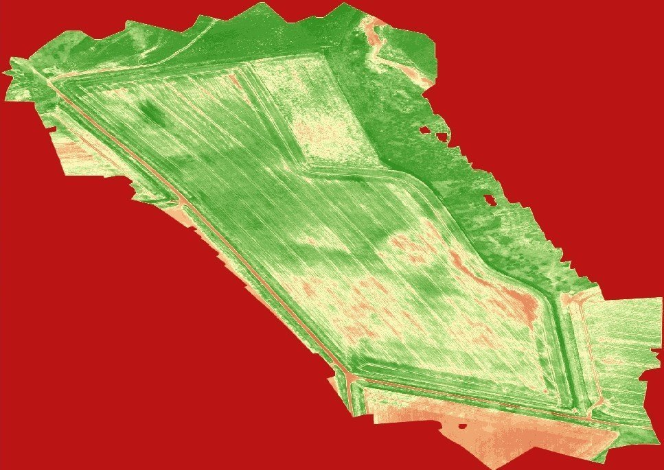Drone NDVI of wheat