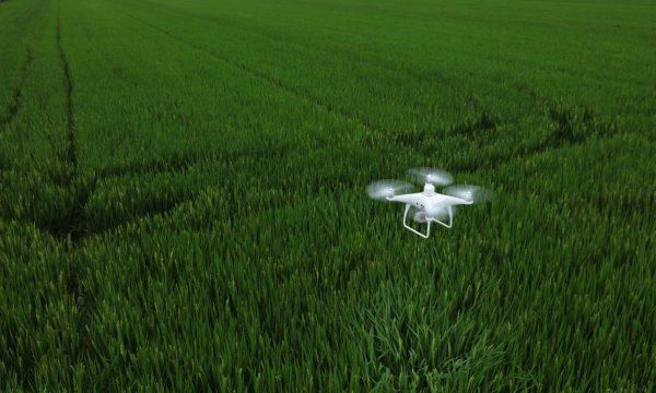 DJI P4 Multispectral drone scouting field