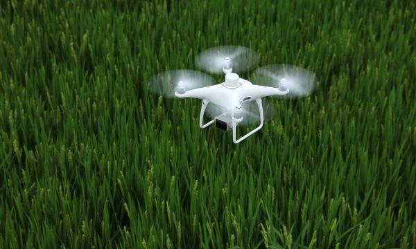 DJI P4 Multispectral drone over wheat