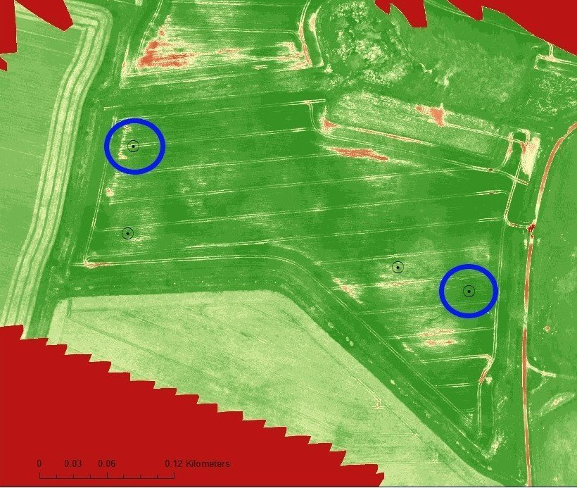 Drones, NDVI v Dry weight
